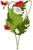 红色和白罂粟和蝴蝶 库存照片