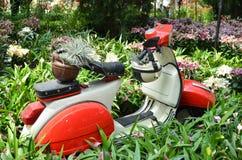 红色和白色大黄蜂类 免版税库存照片