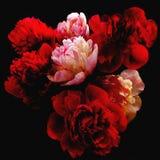 红色和白色牡丹风格化花束在黑色的 免版税库存照片