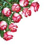 红色和白色玫瑰花束在壁角安排开花 免版税图库摄影