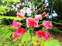 红色和白花和花蕾 免版税图库摄影