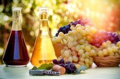 红色和白葡萄酒-秋天健康食物和饮料 免版税库存照片