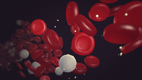 红色和白细胞流动的低谷血液放出 图库摄影