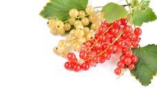 红色和空白无核小葡萄干浆果 免版税库存图片