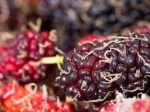 红色和紫色桑树精选的焦点背景是一个小组桑树 蒸汽附有桑树 概念的nat 库存照片