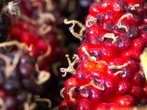 红色和紫色桑树精选的焦点背景是一个小组桑树 蒸汽附有桑树 免版税库存图片