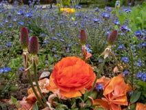 红色和紫色花在庭院里 免版税库存照片