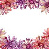 红色和紫色非洲雏菊野花 花卉植物的花 框架边界装饰品正方形 免版税库存照片