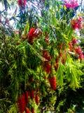 红色和绿色有吸引力的花 图库摄影