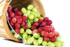 红色和绿色汤普森无核的葡萄 免版税库存图片