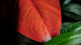 红色和绿色花和平常一样 免版税库存照片