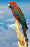 红色和绿色金刚鹦鹉1 库存图片