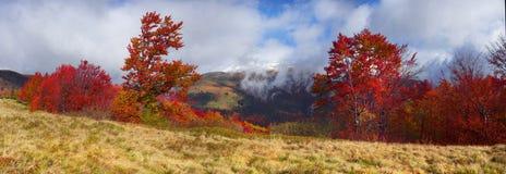 红色和赤褐色秋天在乌克兰喀尔巴汗 免版税库存图片