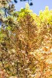 红色和黄色叶子在秋天 库存图片