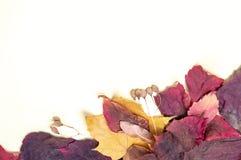 红色和黄色叶子秋天花束在白色背景的 库存照片