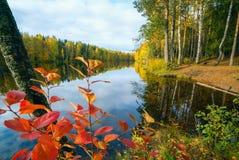 红色和黄色在树离开由湖 秋天横向 库存照片