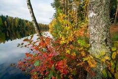 红色和黄色在树离开由湖 秋天横向 免版税库存照片