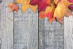 红色和黄色干燥槭树在老木板离开 免版税库存照片