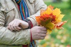 红色和黄色槭树叶子在手上 库存照片