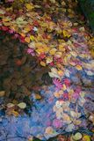 红色和黄色秋叶 免版税库存图片