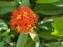 红色和黄色花在公园 库存图片