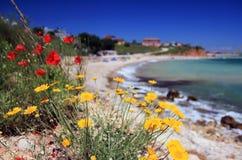 红色和黄色花在海边 免版税库存图片