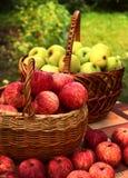 红色和黄色苹果在照片的篮子关闭收获 库存图片