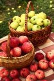 红色和黄色苹果在照片的篮子关闭收获 库存照片