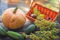 红色和黄色蕃茄新收获在一个柳条筐的在一张老木桌上 图库摄影