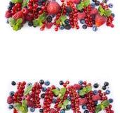 红色和黑蓝色果子和莓果在白色背景 在图象边界的莓果与拷贝空间的文本的 顶视图 成熟r 库存照片