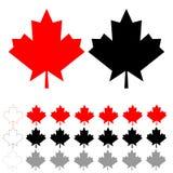 红色和黑枫叶和叶子 免版税图库摄影