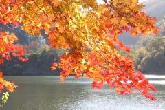 红色和黄色叶子在秋天 免版税库存照片