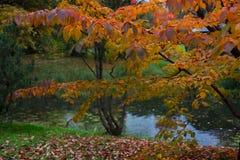 红色和紫色叶子 秋天样式 库存照片