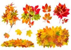 红色和黄色叶子 秋天被设置的自然对象 免版税库存图片
