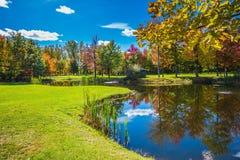 红色和绿色秋天叶子 库存图片