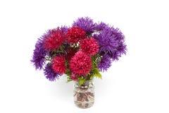 红色和紫色翠菊花束在白色背景的 库存照片