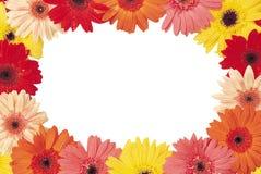 红色和黄色花美丽的花束在一白色backgroun的 免版税图库摄影