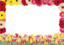 红色和黄色花美丽的花束在一白色backgroun的 库存照片