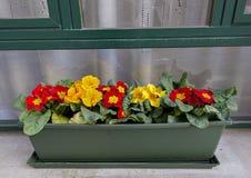红色和黄色花以绿色脚底在威尼斯 免版税库存照片
