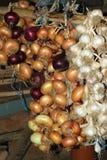 红色和黄色葱和白色大蒜垂悬的庄稼  图库摄影