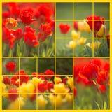 红色和黄色郁金香拼贴画-左边 免版税库存图片