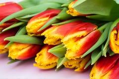 红色和黄色郁金香美丽的花束在桃红色木背景的 关闭 库存照片