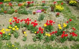 红色和黄色郁金香花园 免版税库存图片