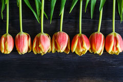 红色和黄色郁金香花束  免版税库存图片