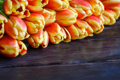红色和黄色郁金香花束  库存图片