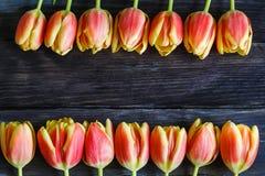 红色和黄色郁金香花束  图库摄影