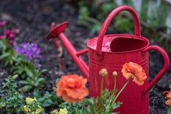 红色喷壶和五颜六色的春天花 免版税库存图片