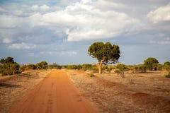 红色土壤路,顺便说一句树,肯尼亚风景 库存照片
