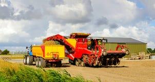 红色土豆起重器在一黄色谷物tipp装载被除草根的土豆 库存照片