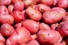 红色土豆 免版税库存图片